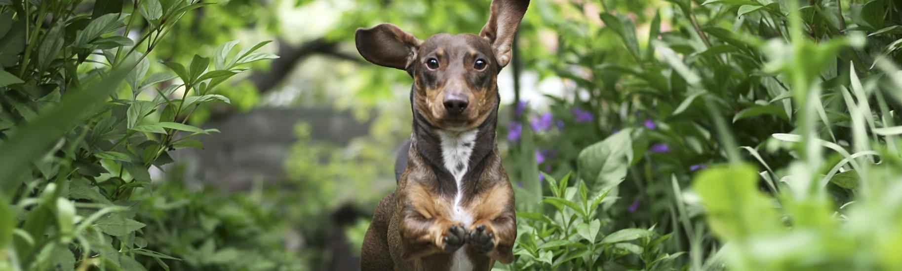 Unleashed Canine Obedience • Dog Training • Cincinnati