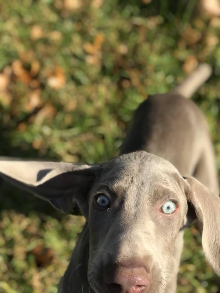 Puppy Obedience Training Cincinnati